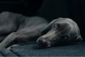 Voor-de-oudere-hond