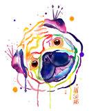 Rainbow aquarel pug