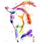 Rainbow paard